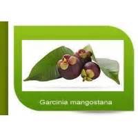 garcinia camboja beneficios picture 13